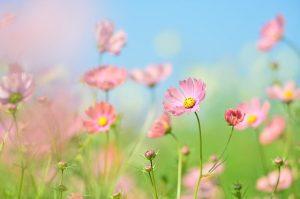 Choosing Plants That Will Not Harm Children