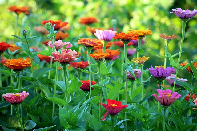 Simple Landscaping Tips Anyone Can Benefit From