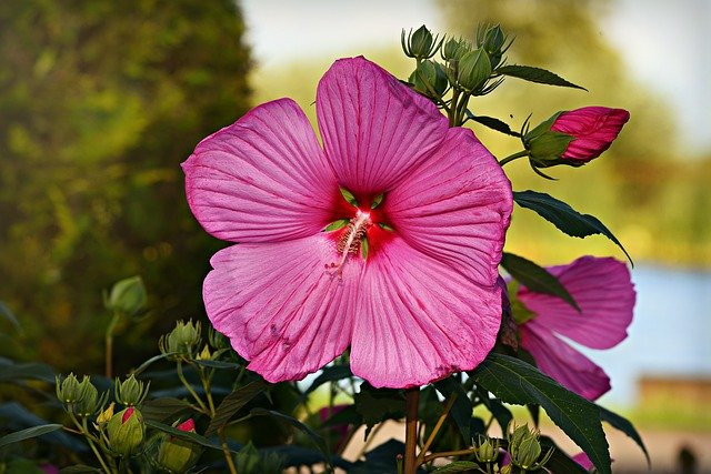 Creating Your Own Oasis – Landscaping Tips For Your Home!