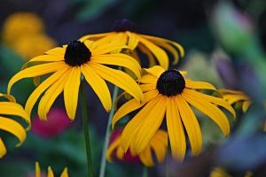 Read more about the article Helpful Tips On Landscaping Your Yard