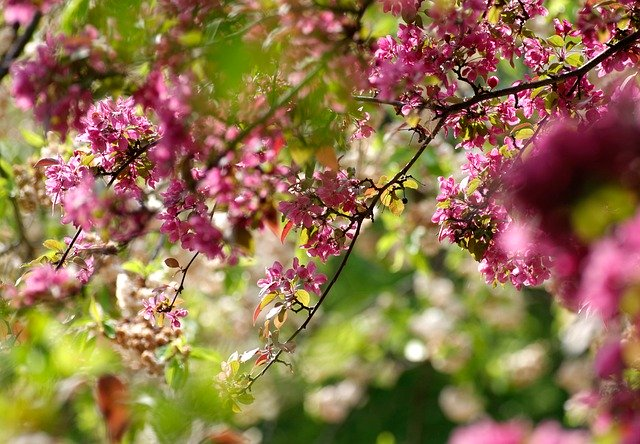You are currently viewing How To Create Beautiful Landscaping Around Your Home