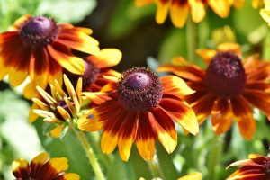 Using The Right Plants In Your Landscaping