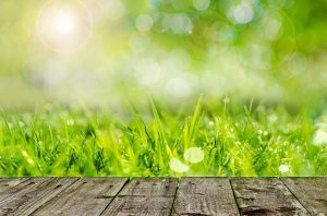 Why You Should Use Organic Products On Your Lawn And In Your Landscaping