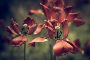 Choosing Plants That Will Not Harm Pets