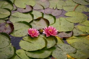 Read more about the article How To Reduce The Use Of Water For Your Landscape
