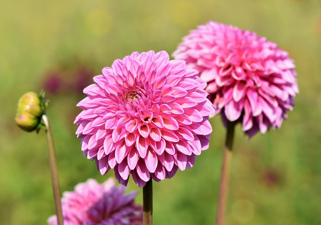 The Best Plants To Choose For A Hardy Landscaped Garden