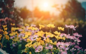 Read more about the article Using Flowers For Your Landscaped Garden