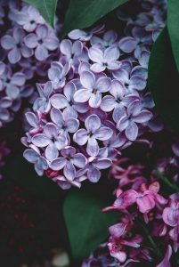 Read more about the article Excellent Advice For Improving The Look Of Your Garden.