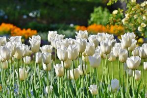 Need Help Landscaping Your Lawn? Try These Tips