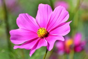 Read more about the article Picking Plants That Require Little Maintenance For Your Landscape