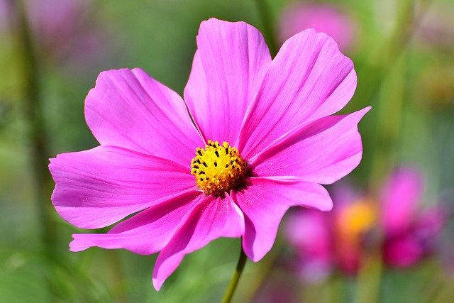 You are currently viewing Picking Plants That Require Little Maintenance For Your Landscape