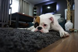 Tips And Tricks For Cleaning Your Carpet