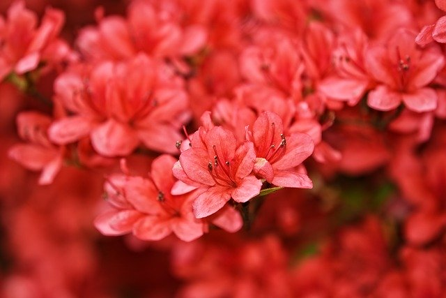You are currently viewing Easy Tips To Beautify Your Property With New Landscaping