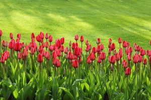 Read more about the article Tips For How To Do-It-Yourself Landscape Your Home