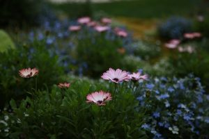 Read more about the article Tips For Great Designs In Your Landscaping Plan