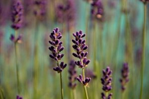 Tips On Landscaping In A Dry Climate