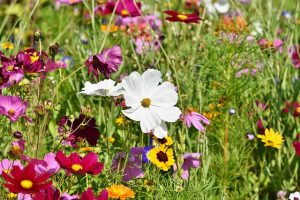 Read The Following Tips For Improving Your Landscaping Skills