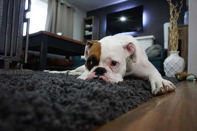 Your Carpet Does Not Need To Look Dirty